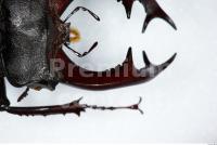 Beetles 0011