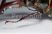 Beetles 0024