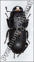 Beetles # 1