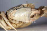 Crab 0030