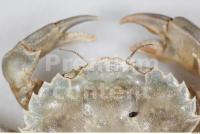 Crab 0002