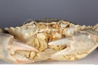Crab 0016