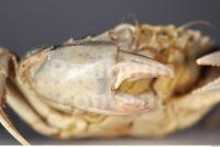 Crab 0014