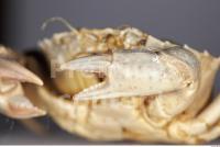 Crab 0015