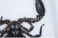 Scorpion 0010