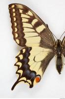 Butterfly 0002