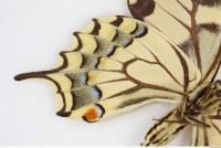 Butterfly 0017