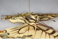 Butterfly 0020