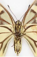 Butterfly 0018