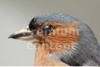 Bird 0017