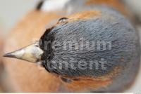 Bird 0021