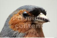 Bird 0013