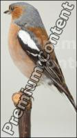 Bird # 1