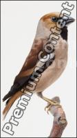 Bird # 2