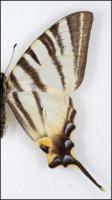 Butterfly # 9