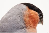 Bird 0015