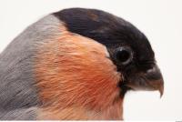 Bird 0016