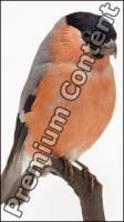 Bird # 5