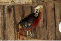 Pigeon 0029