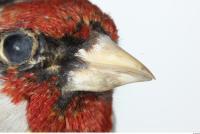 Bird 0007