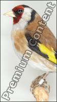 Bird # 7