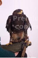 Eagle 0001
