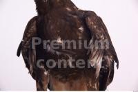 Eagle 0010