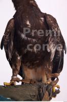 Eagle 0013