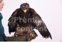 Eagle 0019