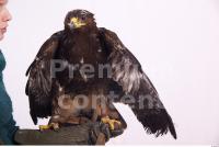 Eagle 0020