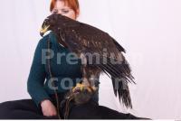 Eagle 0021