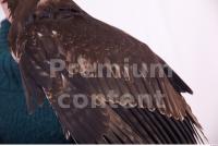 Eagle 0023