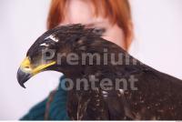 Eagle 0024