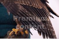 Eagle 0025