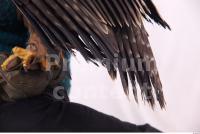 Eagle 0026