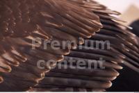 Eagle 0034