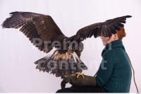 Eagle 0039