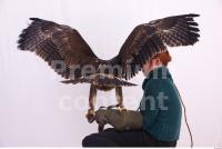 Eagle 0043