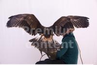 Eagle 0045