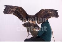 Eagle 0046