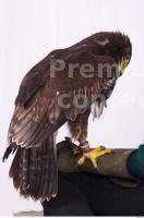 Eagle 0051