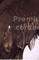 Eagle 0053