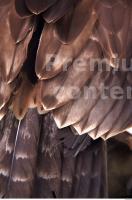 Eagle 0055