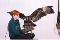 Eagle 0062