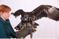 Eagle 0063