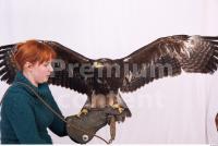 Eagle 0064