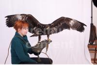 Eagle 0066