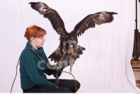 Eagle 0067