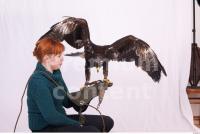 Eagle 0068