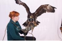 Eagle 0069